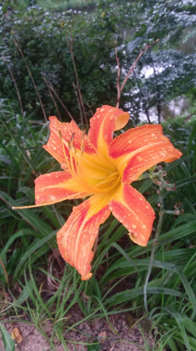 Blomst regnvejr
